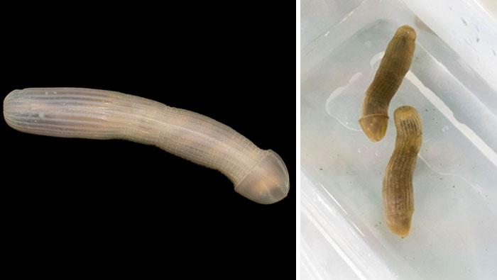 strange-unusual-deep-sea-animals-22-5b16588ea63ed__700